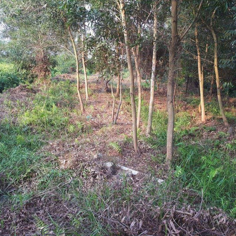 Đất Nền Chính Chủ - Tân Thạnh Tây - 2131m2